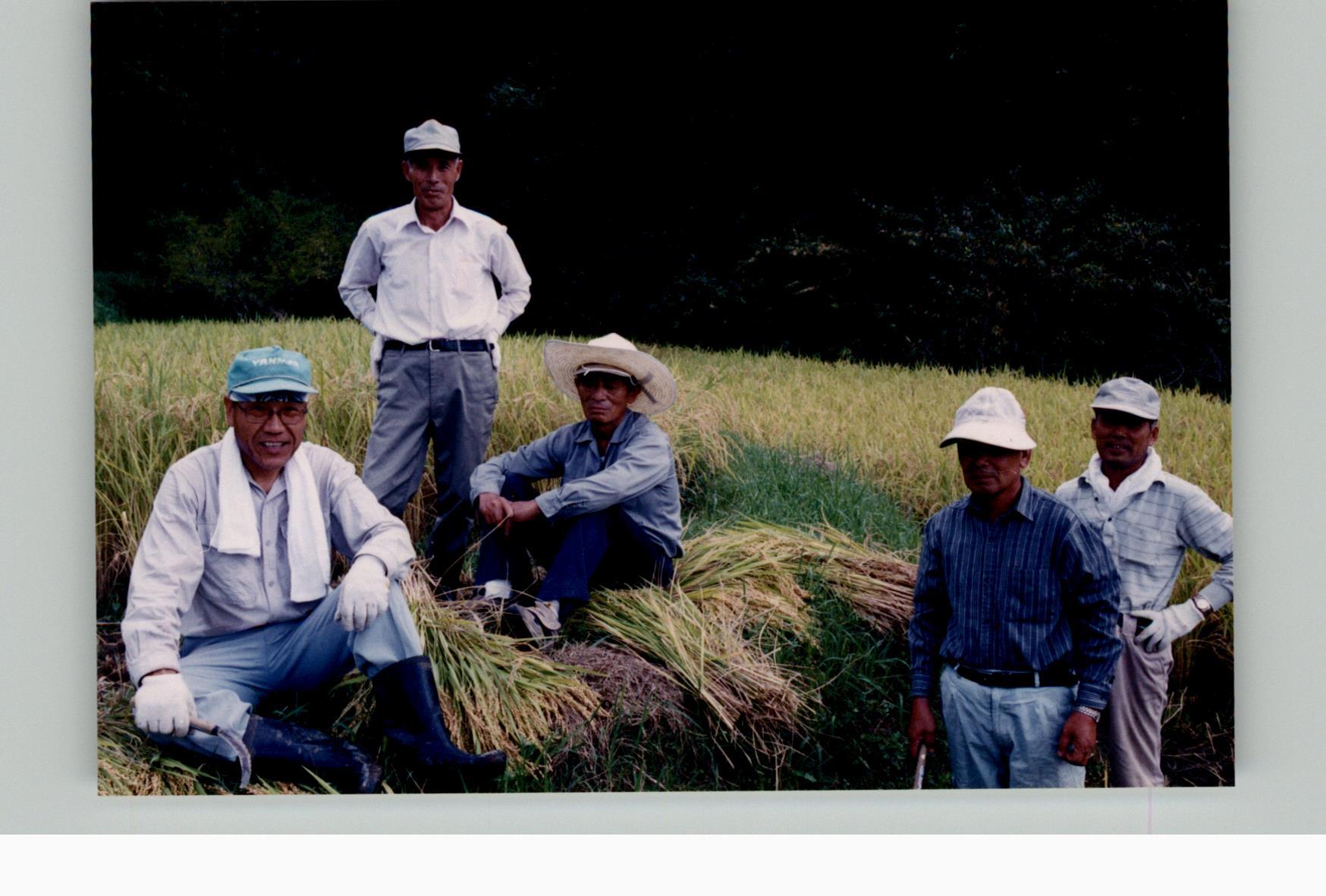 棚田体験ツアー稲刈り2003a