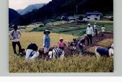棚田体験ツアー稲刈り2003c