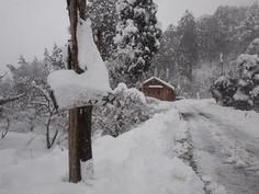 大雪の新年