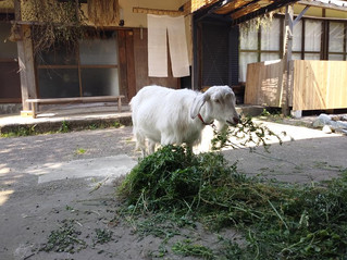ヨモギ栽培の準備完了