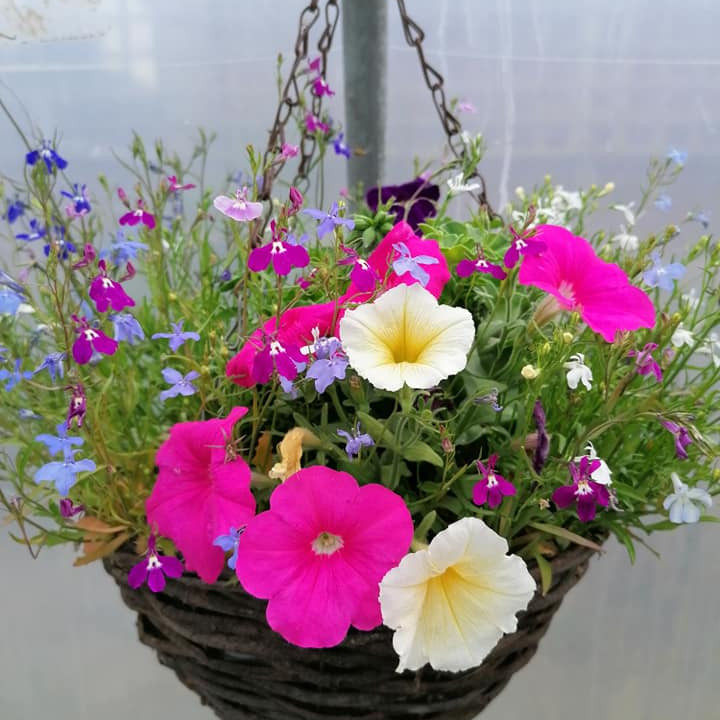 Make your own hanging basket
