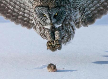 Hawks, Doves, & Owls: Lotka-Volterra Predator/Prey Dynamics in the NCAA Men's Basketball Tou