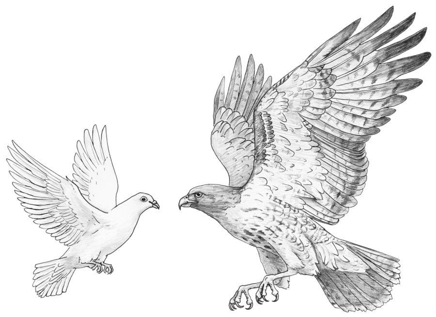 Hawk, Doves, & Owls: Defining the Math for Evolutionary Game Theory Simulations - Chp. 4