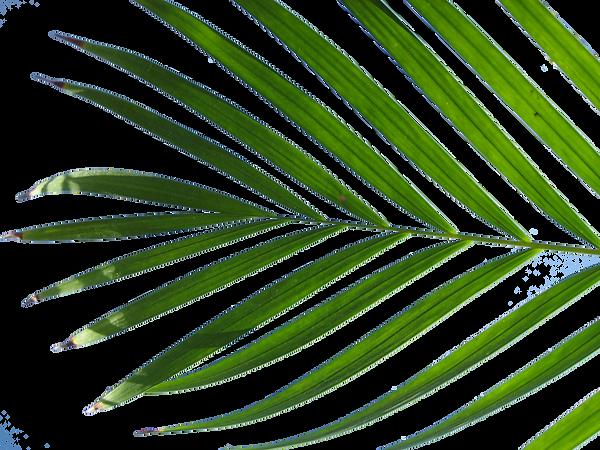 Island Buddies Palm Leaf