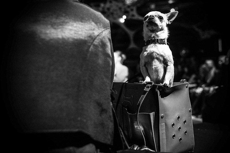 doggy style (5).jpg