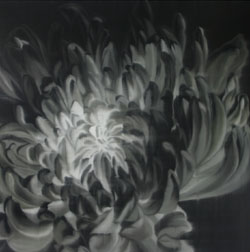 Chrysanthemum in Black & White