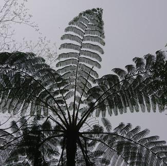 Taiwan Plum Rain