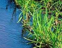 environmental green grass swamp area