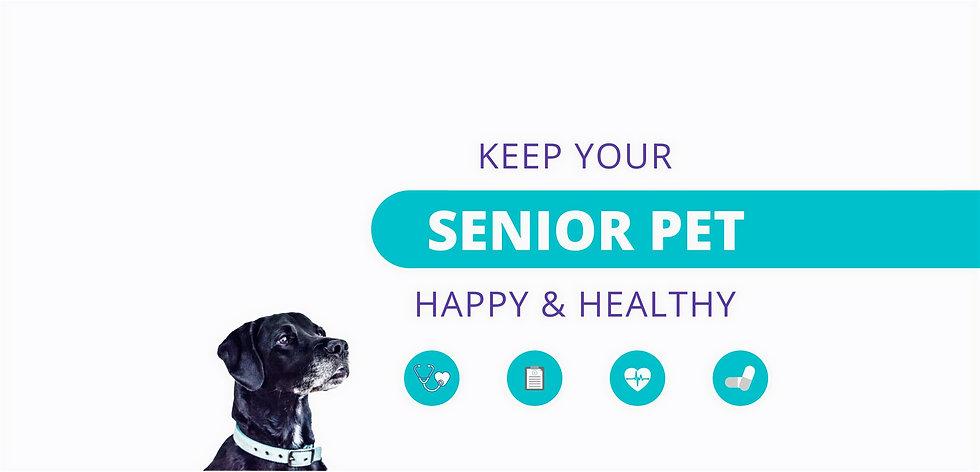 senior pet- banner.jpg