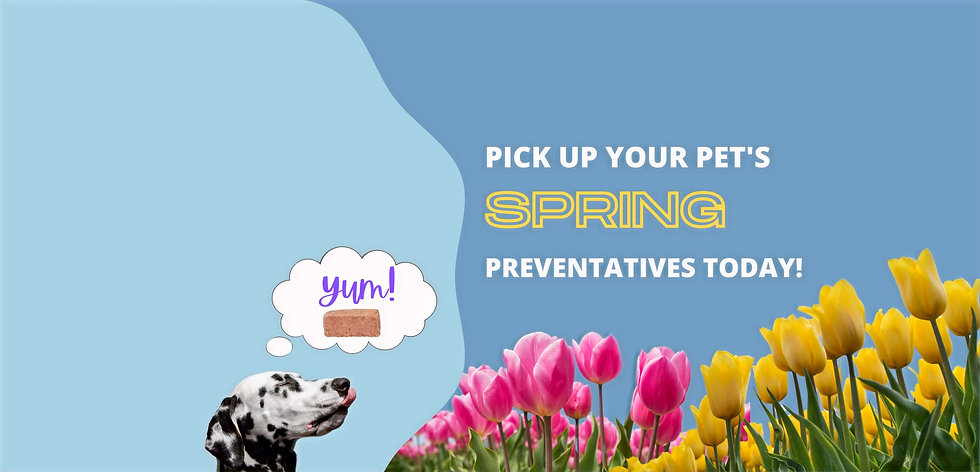 Don't Forget Your Pets Heartworm Prevent