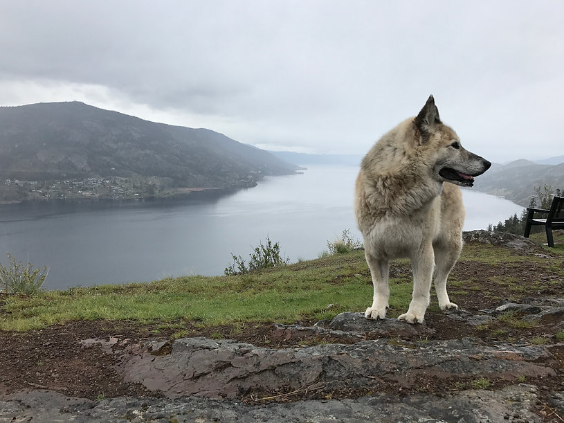 Rad Rover Where Kelowna S Coolest Dogs Go For Adventure