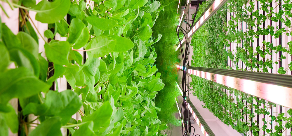 We run a vertical, hydroponic farm on a Paddington rooftop.