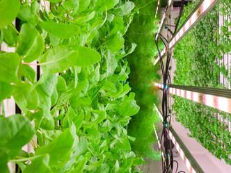 7 Key Advantages of Vertical, Hydroponic Farming