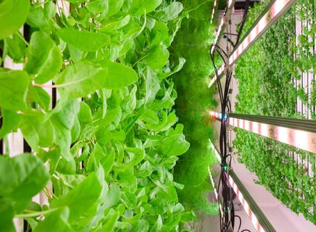 7 Key Advantages of Vertical, Hydroponic Farming.