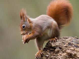 Et pourquoi pas une mangeoire à écureuil...