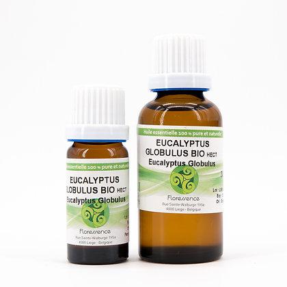 Eucalyptus Globuleux