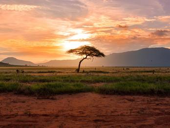 From Safari…..