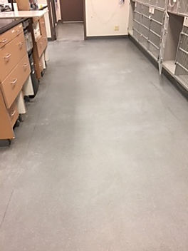 commercial floor restoration service las vegas, nevada