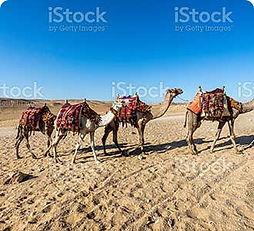 MORNING-DESERT-SAFARI.jpg