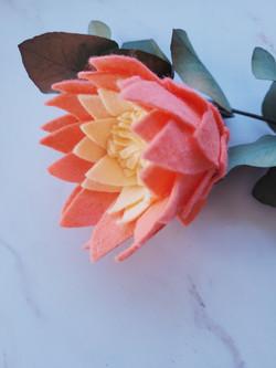 Le King Protea