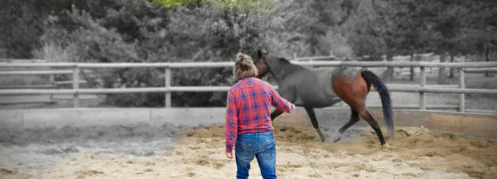 hoefsmid Jorgen in rondpen met paard.jpg