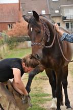 paard bekappen.jpg
