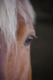 animal-photography-blur-close-up-531974.