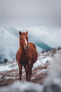 animal-animals-beautiful-2313396.jpg