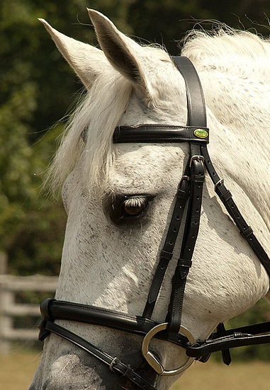 Rhinegold German Leather Bridle with detachable Flash Noseban - Black or Havanna