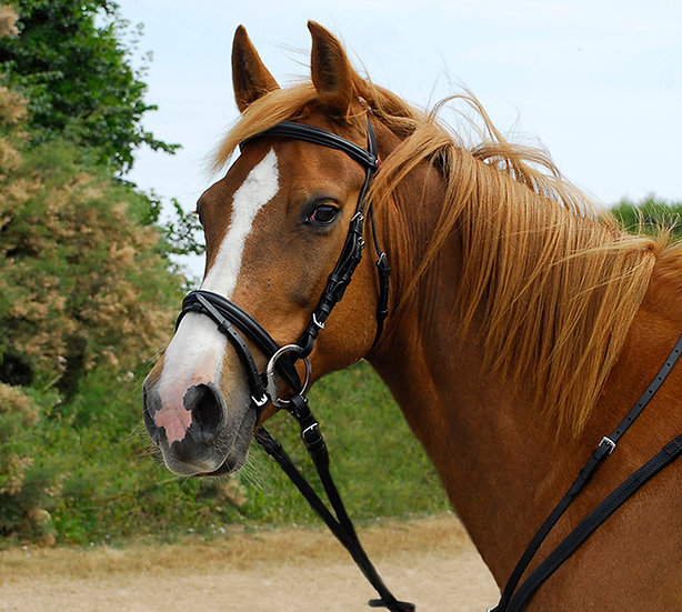Windsor Leather Bridle with Flash Noseband - Black or Havann