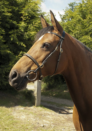 Rhinegold Heritage English Leather In Hand Bridle
