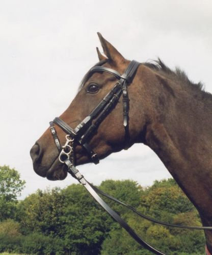 Traditional Bridle with Flash Noseband