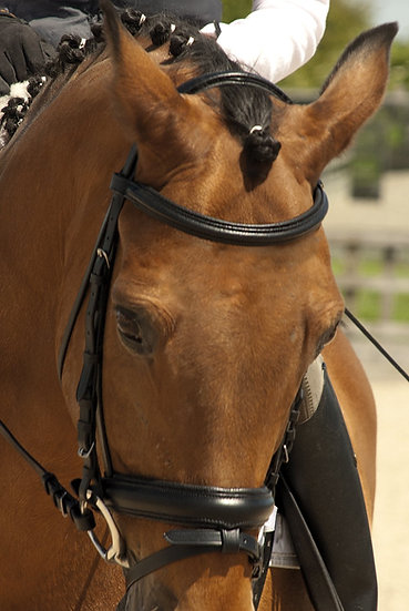 Rhinegold German Leather Bridle with detachable Flash Noseban - Black or