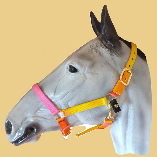 Sheldon Peach Melba Headcollar