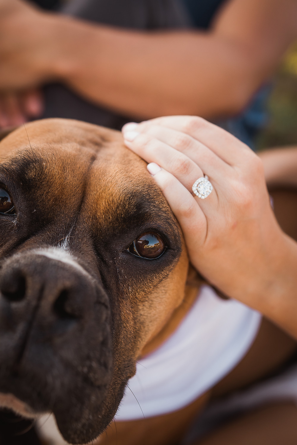 Engagement ring closeup detail with dog Palisade Colorado engagement photos peach orchard