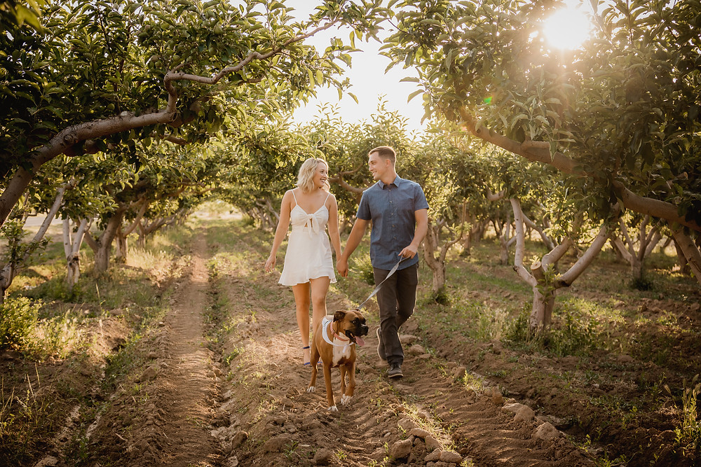 Palisade Colorado peach orchard engagement photos with dog