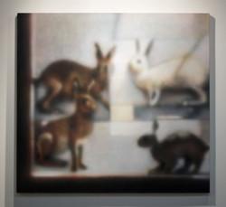 Lo Specola: Rabbit Case, 2015