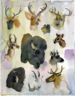 Taxonomy: North American Mammals, 20