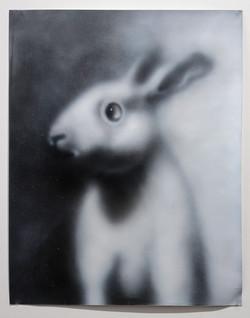White Rabbit, 2016
