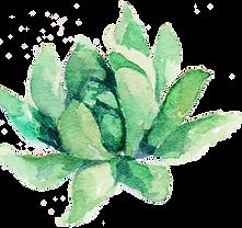 succulent 7.png