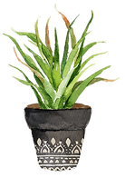 succulent arrangement 8.png