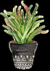 succulent arrangement 8.png