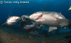 Shark089.JPG