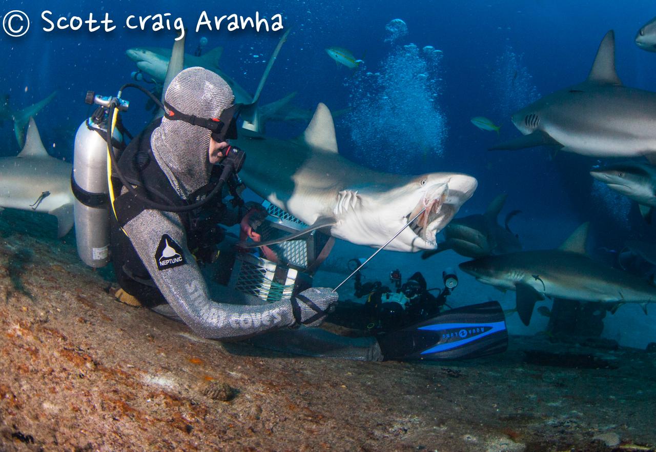 Shark090.JPG