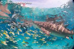 Shark052.JPG