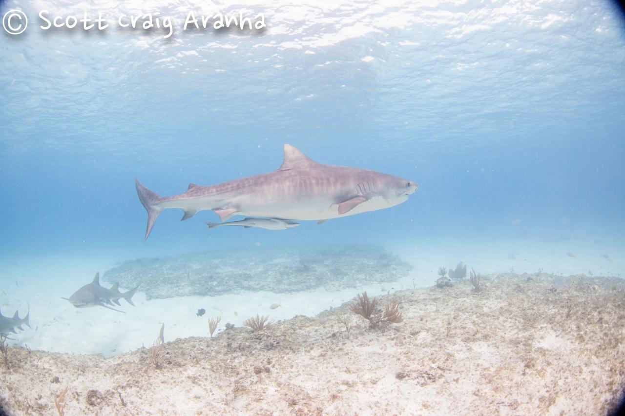 Shark027.JPG