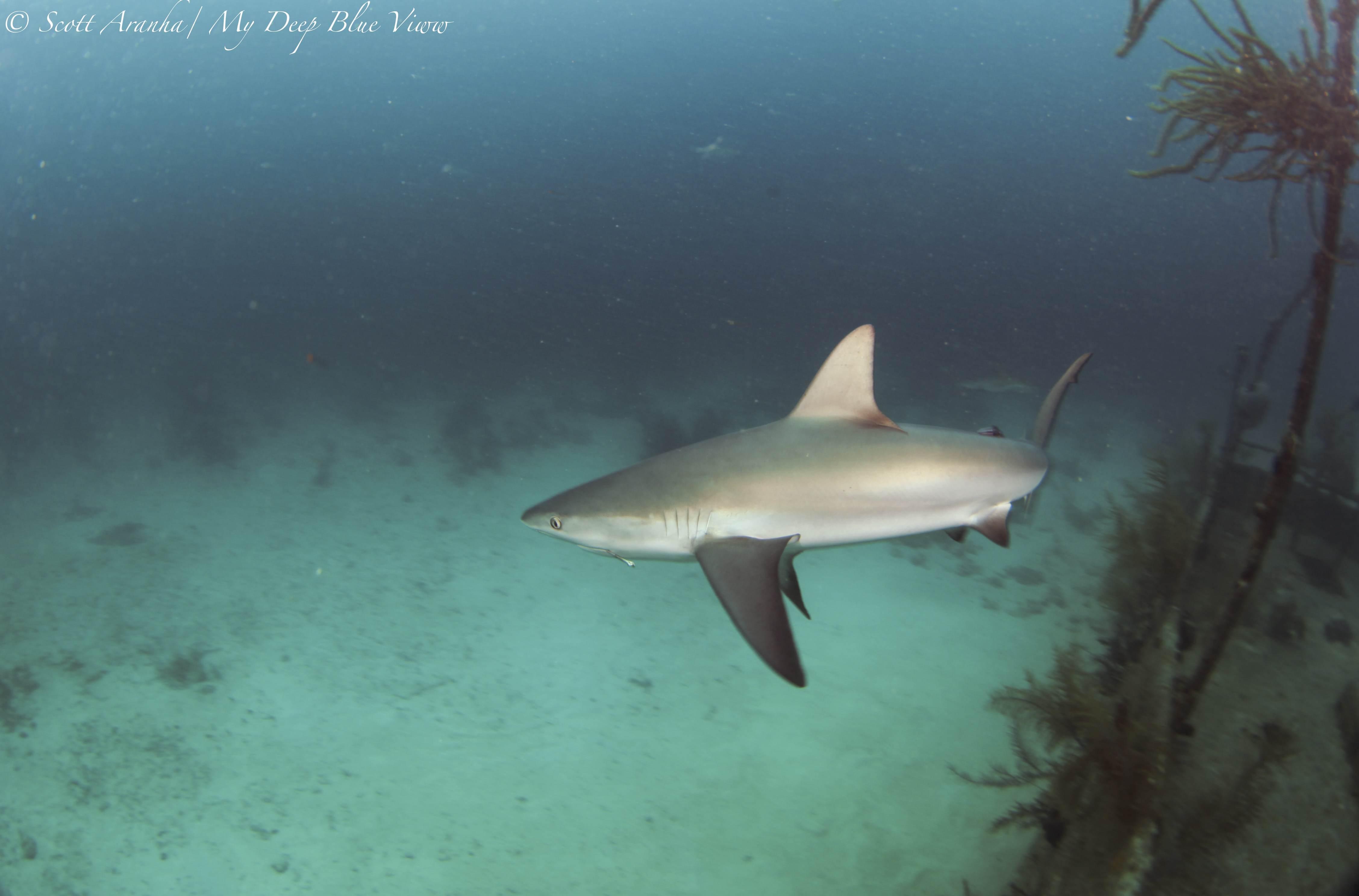Shark095.JPG