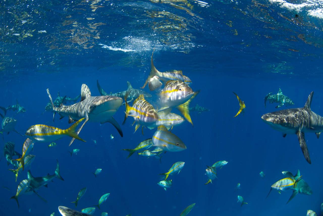 Shark056.JPG