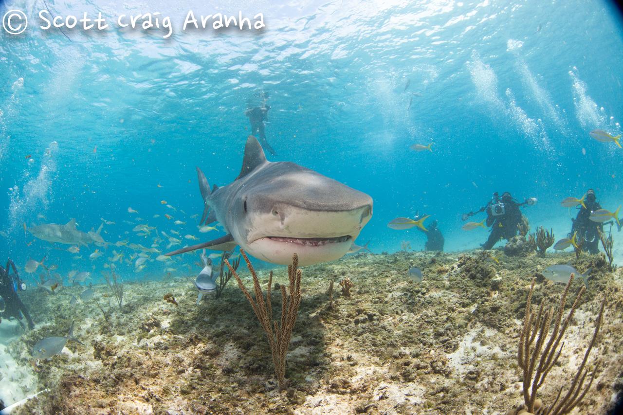Shark020.JPG