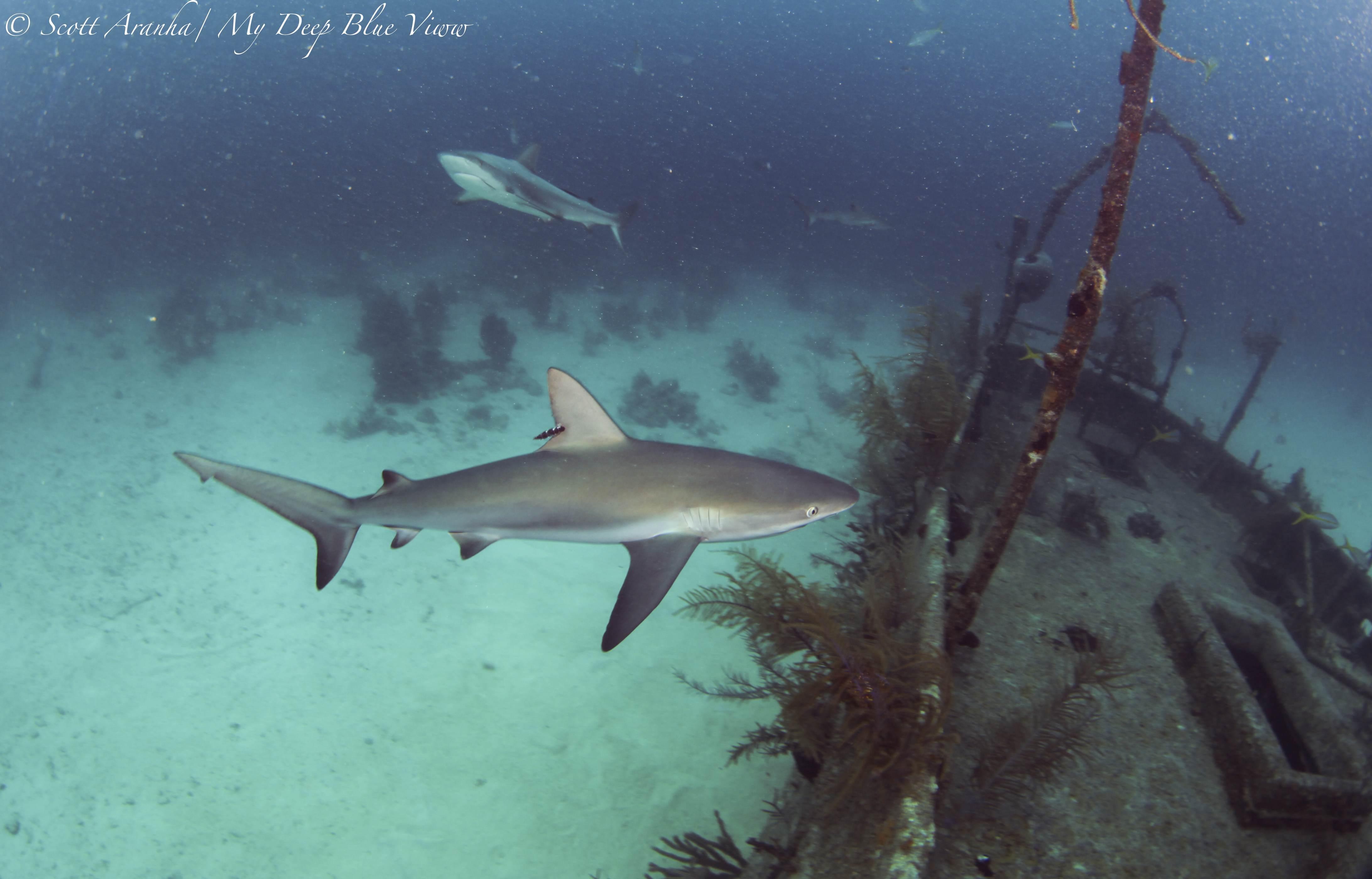 Shark093.JPG